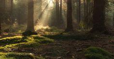 Golden Winter Light by MacroUniverse