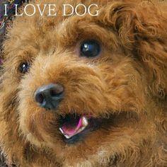 PCペイントで絵を描きました! Art picture by Seizi.N:   僕の飼っている愛犬ティアモは、トイプードル犬で系統でしょうか本当に頭がよく、ぬいぐるみのティディーベアーの様で可愛いし飼いやすいです、そんな愛犬をお絵描きしてみました。  Smokie Norful and Kim Fields http://youtu.be/uNOnyIXy8Mg