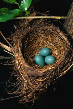 """Look at the eggs and the nest """"found outside the school"""". Examine how animals and their environment interact. Also see how these animals adapt and what ecosystem they live in. NCA"""