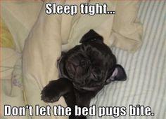 LOL - funny dog pic... For more hilarious humor and great joke pics visit www.bestfunnyjokes4u.com/lol-funny-cat-pic/