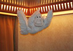 animales-con-toallas-14