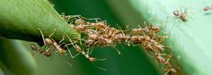 ant-bridge