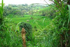 Bali ist eine traumhaft schöne grüne tropische Insel Indonesiens. Bali, World Pictures, Golf Courses, Travel, Pictures, Indonesia, Travel Report, Island, Viajes