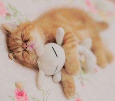 bunny cat cute fluffy