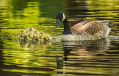 They are my babies by Xiaobing Tian   This picture was taken in Pennypack Creek in the spring, Philadelphia, Pennsylvania