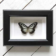Real framed butterfly: Ideopsis juventa // shadowbox // mounted // gift for her // housewarming gift // natural decoration