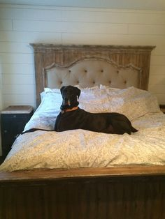 Farmhouse Bed and a Dog