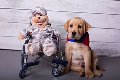 Can you even handle this level of cute from Patriot Paws Service Dogs?