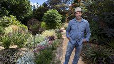John Rayner's  Dandenong garden is constantly expanding. Bocconia arborea background??