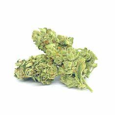 """CBG ist die Mutter aller Cannabinoide.  Die """"Neue Sorte"""" CBG Skunk ist eine weltweit einzigartige Sorte mit mehr als 9% CBG (Cannabigerol) und unter 0,2% THC. Die Blüten werden indoor angebaut unter höchster Qualitätskontrolle. CBG SKUNK ist ganz exklusive und derzeit nur ein gewisse Menge verfügbar! You better be fast! Cannabis, Herbs, Flowers, Hemp, Ganja, Herb, Royal Icing Flowers, Flower, Florals"""