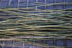 Preparing brambles for weaving Weaving a basic basket Fabric Yarn, Fabric Weaving, Paper Basket Weaving, Market Day Ideas, Making Baskets, Pine Needle Baskets, Angel Crafts, Rope Basket, Basket Decoration
