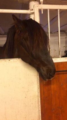 Forrytter ønskes   FINN.no Horses, Animals, Animales, Animaux, Animais, Horse, Words, Animal