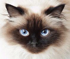 Those blue eyes!!
