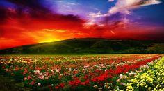 Góry, Zachód, Słońca, Kolorowe, Róże, Uprawa