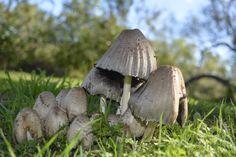 comunità fungine