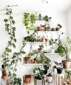 Houseplant Swap - Everything You Need to Know - That Planty Life