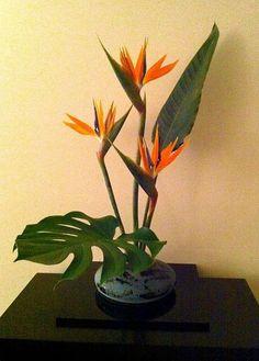 22 Trendy Ideas For Tropical Bird Art Flower Arrangements Tropical Flowers, Tropical Flower Arrangements, Creative Flower Arrangements, Flower Arrangement Designs, Church Flower Arrangements, Exotic Flowers, Purple Flowers, Flower Designs, Beautiful Flowers