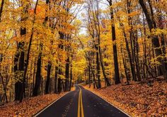 I went to Morgantown, West Virginia in October to see the fall colors. One of he best spots was Coopers Rock State Forest just east of the city. Coopers Rock has a few hikes you can do but you can see great fall colors just driving through the park. Virginia Fall, Virginia Usa, Nature Photography, Travel Photography, Road Pictures, On The Road Again, State Forest, Landscape Pictures, Outdoor Travel