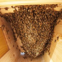 A Season in the Life of Top Bar Beekeeping - Homesteading and Livestock - MOTHER EARTH NEWS