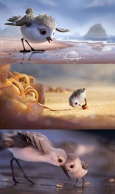Piper : Un court métrage d'animation plus qu'adorable offert par Pixar Disney Love, Disney Art, Piper Pixar, Beautiful Birds, Animals Beautiful, Cute Baby Animals, Funny Animals, Inspirer Les Gens, Funny Dog Jokes