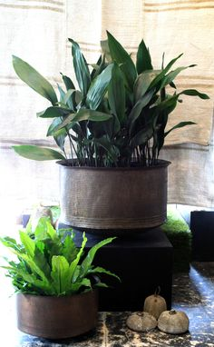 Traditional Indian brass pot w/ Aspidistra elatior and Aplenium australasicum