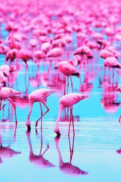 Die 47 besten Bilder von Beach Trend: Think Pink in 2013