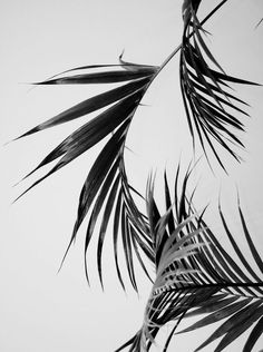 minimal – black and white tropical iphone wallpaper background Source by L Wallpaper, Moomin Wallpaper, Hipster Vintage, Iphone Wallpapers, Diy Art, Planting Flowers, Art Photography, Photography Wallpapers, Photography Awards