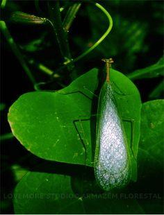 Insect @ Armazém Florestal garden
