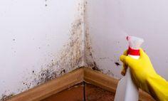Plíseň na stěnách je nejenom nevzhledná, ale je také nebezpečná. Ukážeme si, jak ji snadno odstranit Best Mold Remover, Remove Mold From Walls, Clean Black Mold, Mold In Bathroom, Tea Tree Essential Oil, Hydrogen Peroxide, Mold And Mildew, Clean House, Tricks