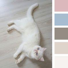 CatColors . . . . #casa #apartamento #cats #catslover #cat #gato #persiancat #colors #paletadecores #amor #animal #blue #homesweethome #myhome #instagram #designdeinteriores #design #bomdia #interior2you #interiordesign #interiordecor #interior #instacat #instahome #couples #instagram #instagood #tonoadorofarm #lovestory