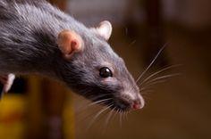 Die Folgen des Klimawandels: Erstes Säugetier ausgestorben...