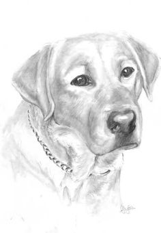 Limited edition print Labrador Portrait by Ally Tate £9.99