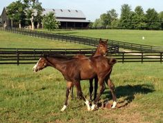 Tales from the Crib: Outwork | 2016 Kentucky Derby & Oaks | May 6 and 7, 2016 | Tickets, Events, News