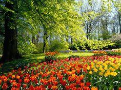 screensavers and backgrounds | Ventube.com Tulip Field In Spring Desktop Background Screensavers