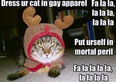 LOLCat: Dress ur cat in gay apparel. Put urself in mortal peril. Christmas Animals, Christmas Cats, Christmas Humor, Christmas Clothes, Funny Cats, Funny Animals, Cute Animals, Funniest Animals, Funny Horses