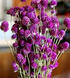 Dried Purple Globe Amaranth- a pop of color that lasts all season, available in several colors.  These gorgeous dried flowers look great in a vintage inspired vignette, a spring wreath or centerpiece, in a basket, or even as wedding boutonnieres! #springdecor #homedecorating #driedflowers #weddinginspiration #diyflowers #diycrafting #easterdecor #springdecorating #purpleflowers #homedecorideas #boutonnier