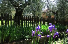 Agriturismo Villa Pacinotti, Tuscany. An oasis of peace in the Tuscan countryside http://www.organicholidays.com/at/3289.htm