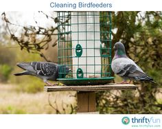 This guide is about cleaning birdfeeders. Keeping your bird feeders clean will help maintain the health of your wild visitors.