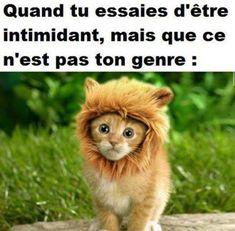 Quand tu essaies d'être intimidant, mais que ce n'est pas ton genre !!! #blague #blagues #drole #drôle #image #images #marrant #rire