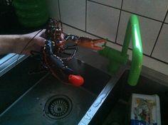 Hummer-tomat-Vola installation a la Felix