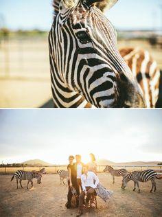 Bucket List: Fashion shoot with Zebras