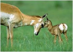 Top 10 Animal Dad's | Happy Father's Day out there to all you fuzzy, feathered, furry ...