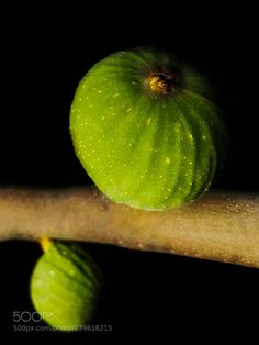 Wild Figs (Jenny Haritou / Chalkida / Greece) #LG-D605 #macro #photo #insect #nature