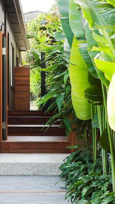 Private villa gardens: Heliconias & Xanadu, Tiger Grass background