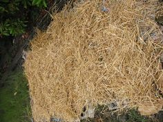 Growing potatoes covered with straw (no digging!). I'll be darned.... GREAT site for urban gardening! - citygirlfarming.com