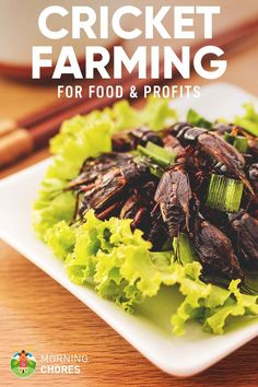 Crickets are a super healthy protein source. We review how to start cricket farming as a source of protein for humans, chickens, reptiles and even as bait.