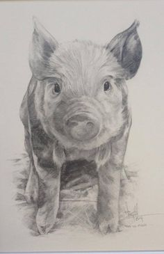 'This lil Piggy' (2014) A4 graphite sketch by artist Tony O'Connor whitetreestudio.ie