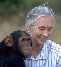 Valerie Jane Morris-Goodall nació en Londres, Inglaterra, en el año 1934. Como primatóloga, estudió el uso de herramientas en chimpancés, a quienes ha dedicado el estudio de toda su vida. Jane ha realizado profundas y fructíferas investigaciones científicas sobre el comportamiento, el uso de herramientas y los modos de vida de los chimpancés.En 2003, sus trabajos fueron reconocidos por la comunidad científica con el Premio Príncipe de Asturias de Investigación Científica y Técnica.
