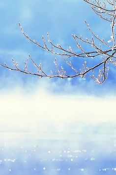 Nature Winter Clear Sunny Snowy  Icy Tree Branch #iPhone #4s #wallpaper