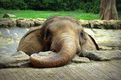 #photography #animals #elephants
